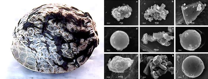 Semillas de cáñamo Vs. contaminación del aire